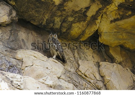 Indian Eagle Owl, Bubo bengalensis. Bera from Rajasthan, India