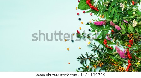 Ingredients of herbal alternative medicine, holistic and naturopathy approach on blue background. Herbs, flowers for herbal tea. Top view, copy space, flat lay. #1161109756