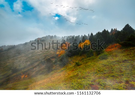 The summit of the mountain. Colorful trees, flying birds. Magnificent view. Turkey.