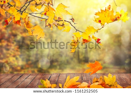 autumn leaves background #1161252505