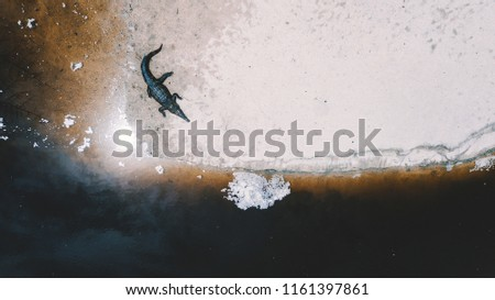 Close up aerial photo of a Caiman near a body of water #1161397861