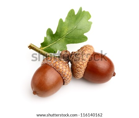 Dried acorns with leaf Royalty-Free Stock Photo #116140162