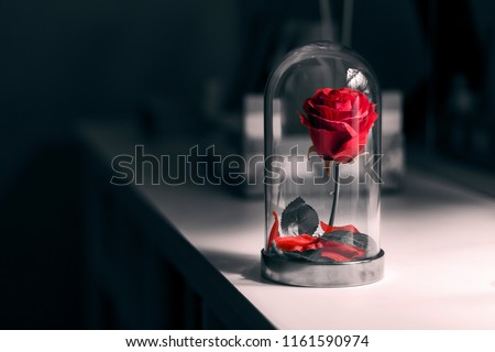 A rose in the entrance hall. Royalty-Free Stock Photo #1161590974