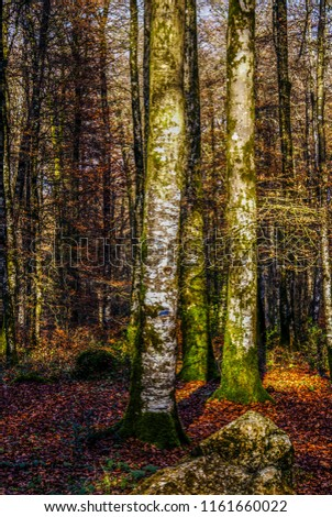 France Brittany autumn forest #1161660022