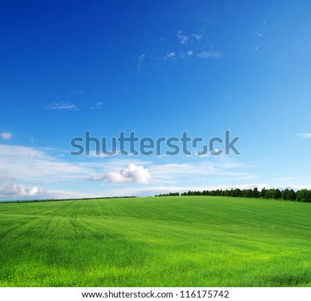 green field and blue sky #116175742