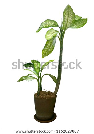 House plant in flowerpot isolated on white background #1162029889