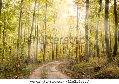Sun shining through autumn leaves #1162165237