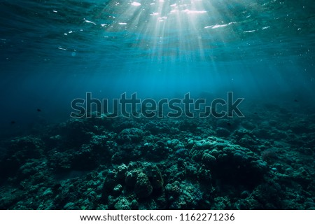 Tranquil underwater scene with copy space. Tropical sea