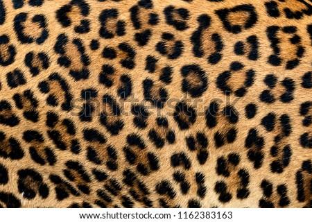 Leopard fur texture (real fur) #1162383163
