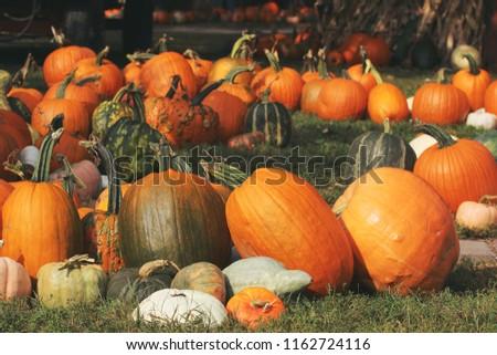 Pumpkins for sale at farmer market #1162724116