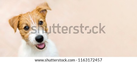 Happy smiling jack russell terrier dog pet puppy - web banner with copy space #1163172457