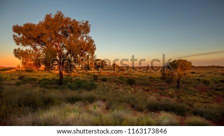 sunset in the australian bush #1163173846