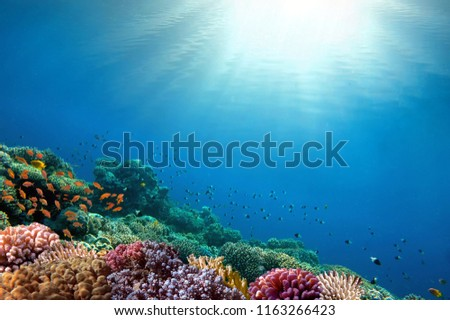 Underwater coral reef background.