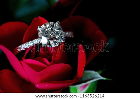 Platinum Diamond Ring On Red Rose #1163526214