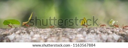 Leaf cutter ants marching to nest carrying sections of leaves Royalty-Free Stock Photo #1163567884