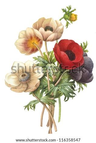 flower illustration Royalty-Free Stock Photo #116358547