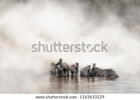 Herd of migrating zebra stopping for a drink of water in Africa's Mara River with room for text in dramatic dusty background #1163610229