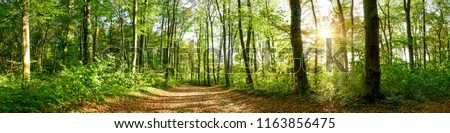 Panorama of a forest with path and bright sun shining through the trees #1163856475