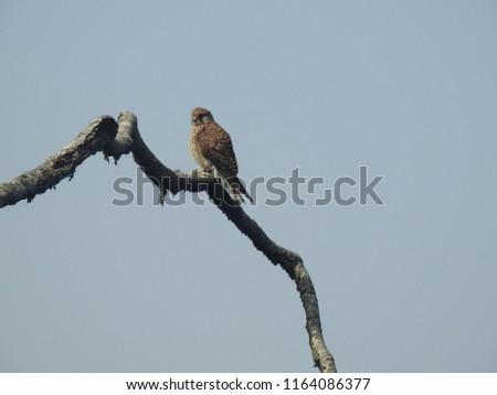 natural habitat of birds #1164086377