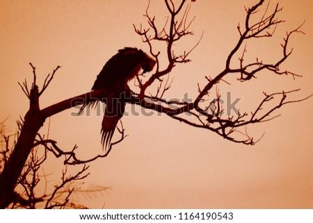 A large black bird silhouette on an orange Halloween spooky night. #1164190543