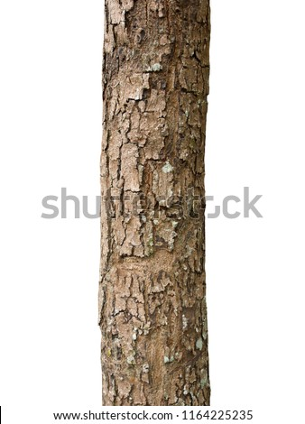 Trunk of a tree Isolated On White Background #1164225235