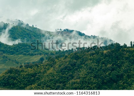 Beautiful tropical mountain mist in rain forest #1164316813