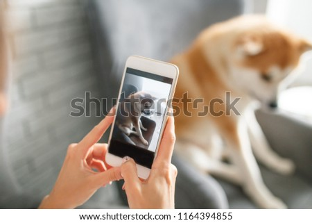 Girl is taking pictures of her dog on the phone. Dog is sitting on the chair. Hands with phone close up