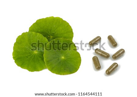 Asiatic Leaf Herb gotu kola, indian pennywort, centella asiatica, isolated on white background. Extracted into capsules or essential oil. ayurveda herbal medicine inhibited or slowed growth of cancer  #1164544111