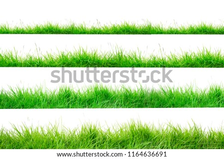 Green Grass Border isolated on white background.The collection of grass.(Manila Grass)The grass is native to Thailand is very popular in the front yard. #1164636691
