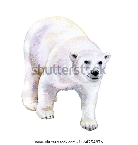 Polar white bear isolated on white background. Watercolor. Illustration. Template.  Hand drawn. Greeting card design. Clip art.