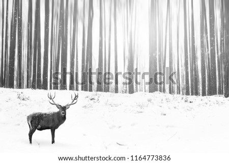 Noble deer in a winter fairy forest. Snowfall. Winter Christmas creative image. Minimalism concept. Black and white picture.
