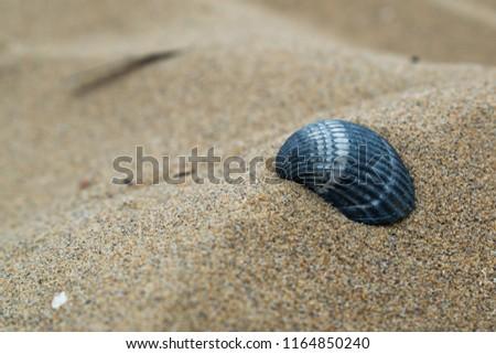 A shell closeup in a sand of an Italian beach in the Venetto region. #1164850240
