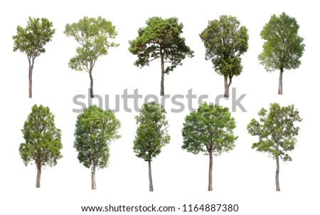 Collection of Isolated Trees on white background. A beautiful trees from Thailand. Suitable for use in architectural design or Decoration work. Used with natural articles both on print and website. #1164887380