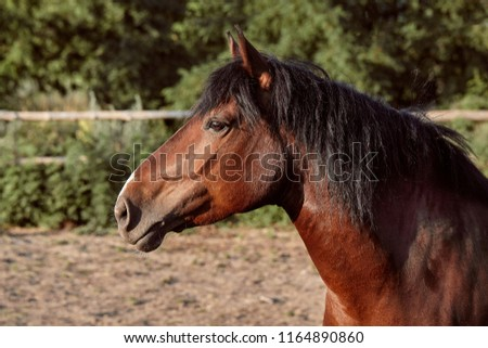 Beautiful brown horse, close-up of muzzle, cute look, mane, background of running field, corral, trees #1164890860