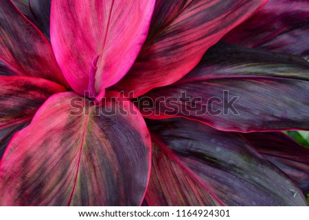 tropical leaves, large foliage nature background #1164924301