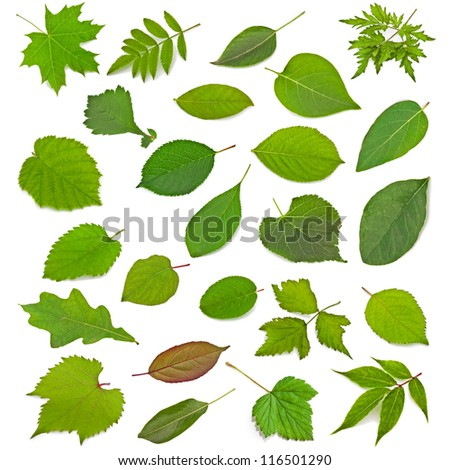 Collection of leaves isolated on a white background #116501290