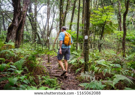 Hiker on the trail in green jungle, Hawaii, USA #1165062088