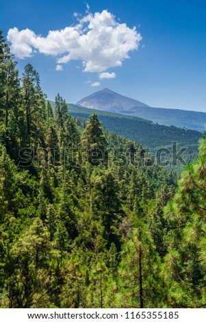 La Orotava pine forest with Teide volcano with blue sky and white clouds background, Tenerife, Canary islands, Spain #1165355185