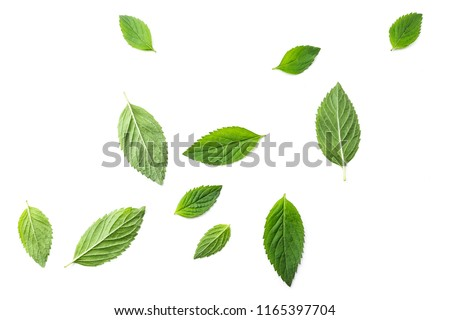 Flying mint leaves over white background #1165397704