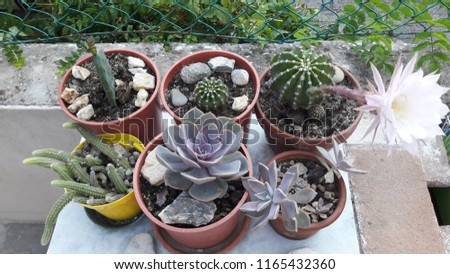 Vase with plants #1165432360