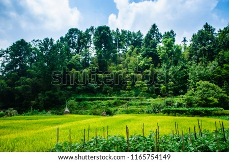 Rice fields and countryside scenery in summer #1165754149