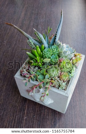 The succulent terrarium in a concrete square pot decorated with toy rabbit relief #1165755784
