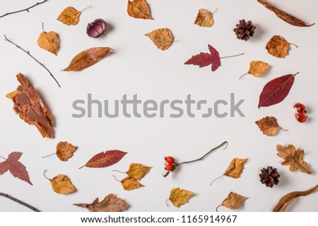Autumn composition: fallen leaves, dry plants on white background with space for text in center. Top view. Flat lay. #1165914967