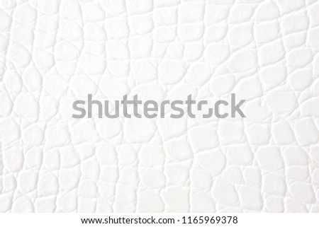 White crocodile leather background #1165969378