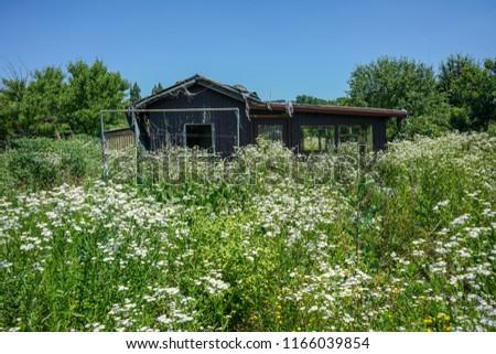 empty abandonend wood house in overgrown garden #1166039854