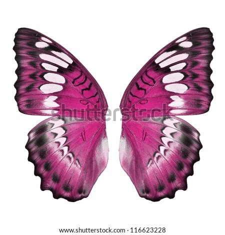 Pink butterfly wing isolated on white background Royalty-Free Stock Photo #116623228