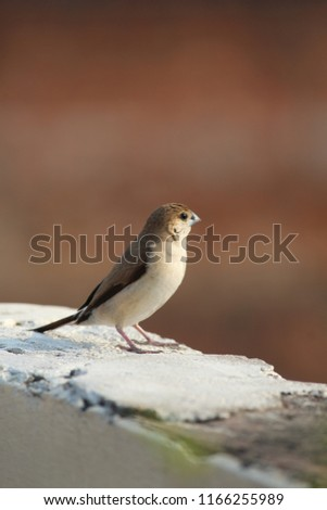 The house sparrow is a bird of the sparrow family Passeridae, found in most parts of the world. A small bird, it has a typical length of 16 cm and a mass of 24–39.5 g #1166255989
