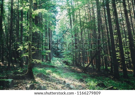 nature tree . pathway in the forest with sunlight backgrounds. #1166279809