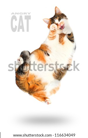 Funny picture of a jumping cat.