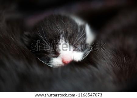 baby kitten peacefully sleeping #1166547073